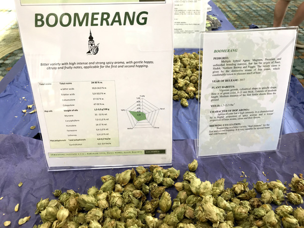 Boomerang - a new hop from the Czech Republic