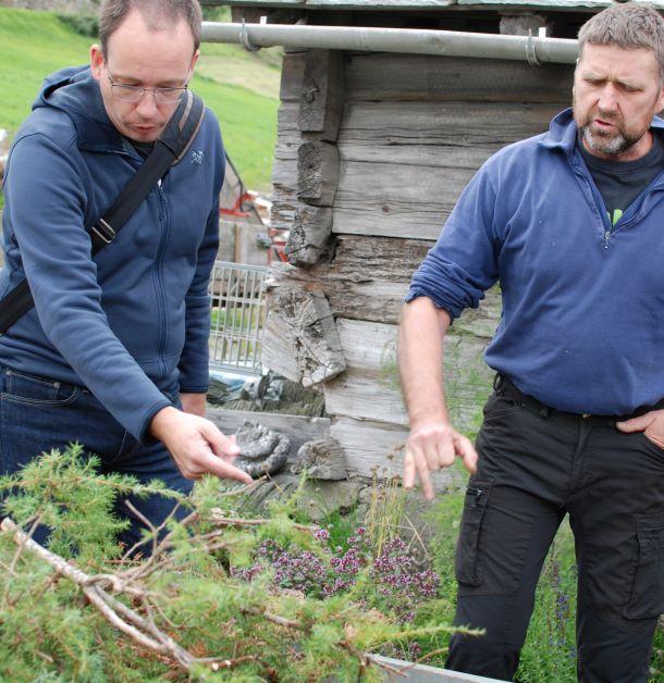 Lars Grashol examines juniper