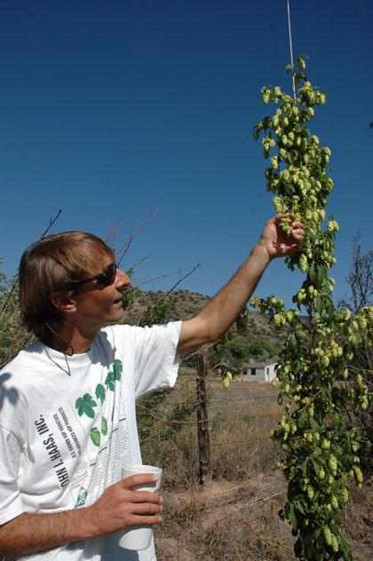 Newomexicanus hops