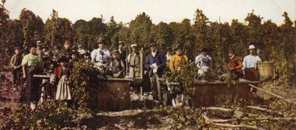 Hop pickers, hop harvest