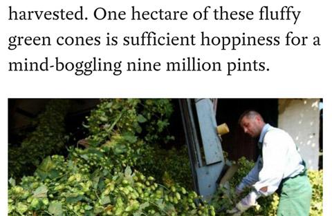 Hallertau hop harvest