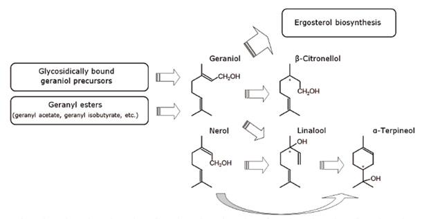 Biotransformation of hop compounds